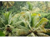 Site de rencontres comme coco